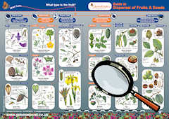 Guide for Identifying Dispersal of Fruits & Seeds