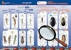 Guide to indentify Freshwater Invertebrates